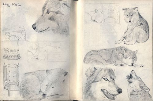 Grey wolf sketch page