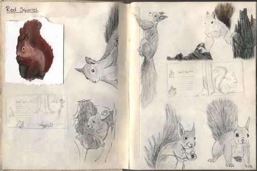 Red squirrel sketch page